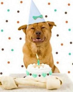 Cumpleaños para mascotas